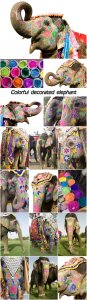 Colorful decorated elephant, Jaipur, Rajasthan, India